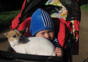 Домашние животные: Быть или не быть?