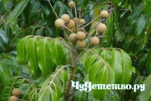 Выращиваем экзотические растения 211
