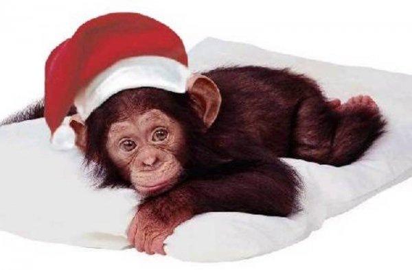 Год обезьяны, какие года