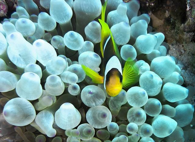 какое море в хургаде египет фото