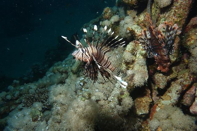 Рекомендации при укусах подводных, ядовитых обитателей Красного моря