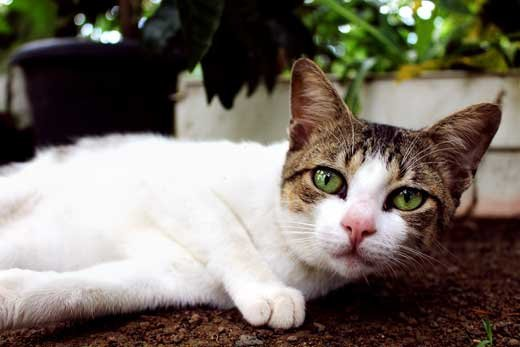 Чем кошки в доме хороши