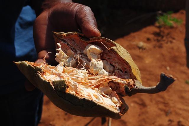 Как выглядят плоды баобаба?