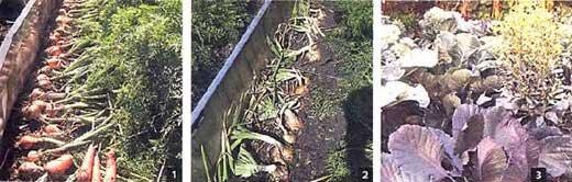 Как вырастить хорошую рассаду - из опыта дачника