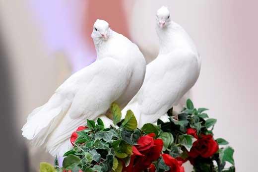 Белые голуби на африканской свадьбе
